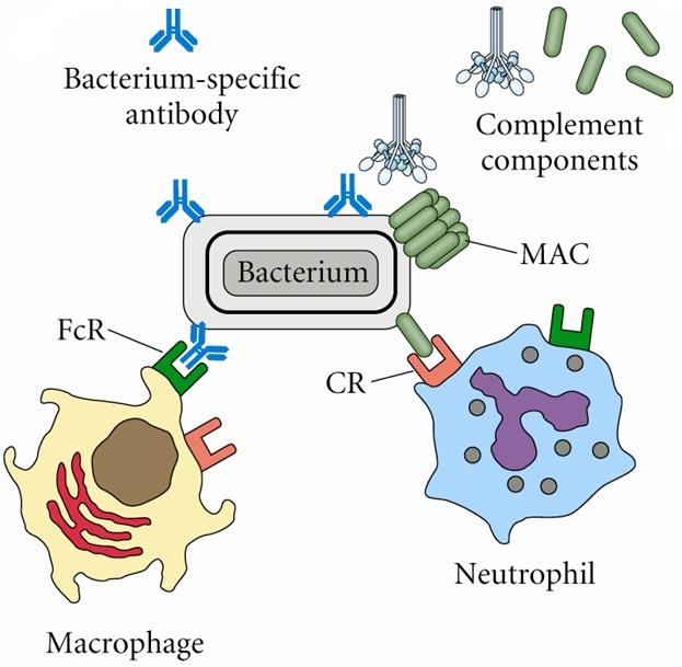 Characteristics bacteria