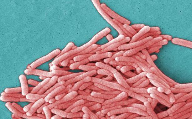 Legionella pneumophila » Gram-Negative Bacteria » Pathogen Profile ...
