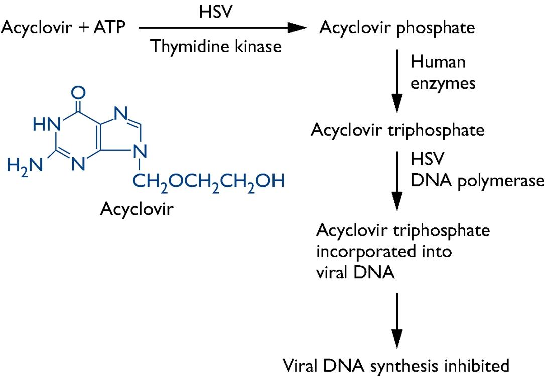 Acyclovir for herpes simplex encephalitis eeg