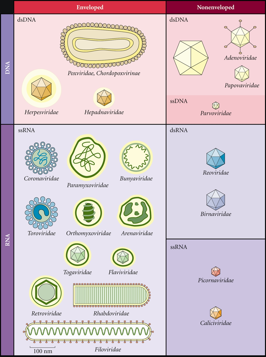 different types of pathogens
